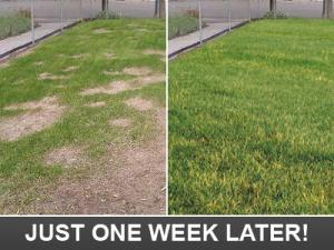 just one week later our Desoto TX Sprinkler Repair team takes your lawn from dead to amazing